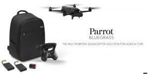 Parrot Bluegrass